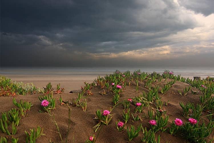 çiçek fırtınası ne zaman