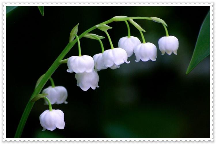 Çiçek FotoğraflarıNelerdir, En Güzel Çiçek Fotoğrafları Hangileridir?